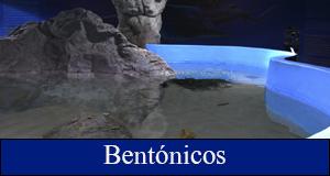 Bentónicos
