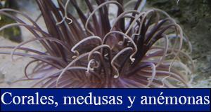 corales medusas anemonas