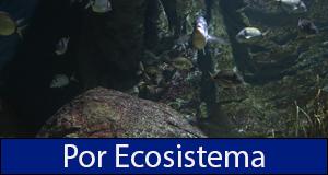 Por ecosistema