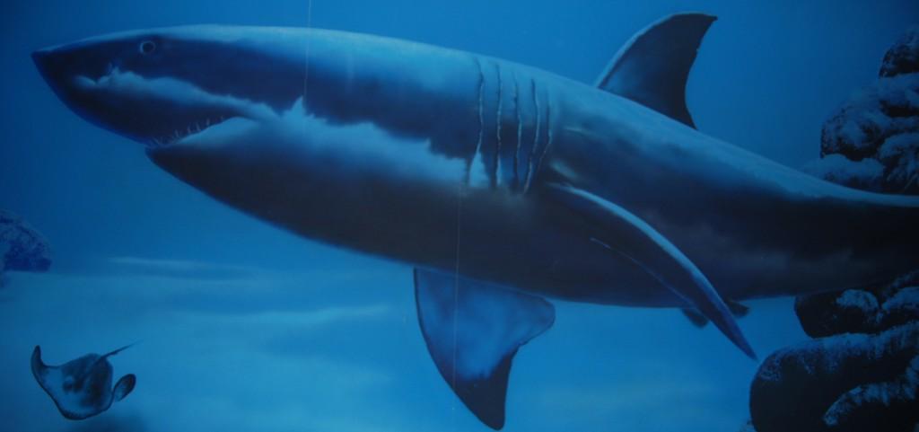 primeros-tiburones