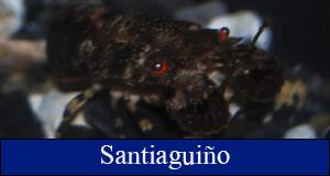 santiaguiño